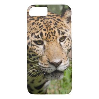 Captive jaguar in jungle enclosure 2 iPhone 8/7 case