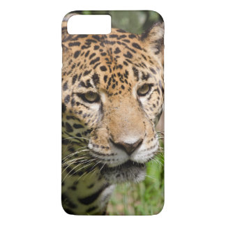Captive jaguar in jungle enclosure 2 iPhone 8 plus/7 plus case