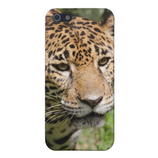 Captive jaguar in jungle enclosure 2 iPhone SE/5/5s case