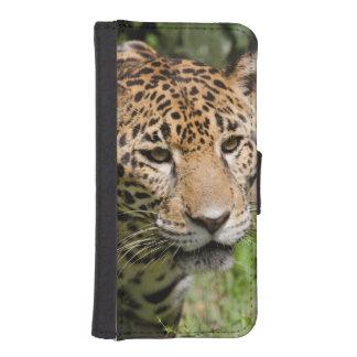 Captive jaguar in jungle enclosure 2 iPhone SE/5/5s wallet case