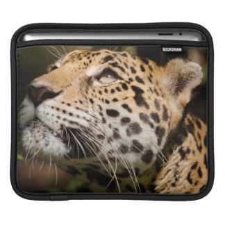 Captive jaguar in jungle enclosure 3 sleeve for iPads
