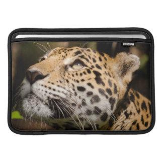 Captive jaguar in jungle enclosure 3 sleeve for MacBook air