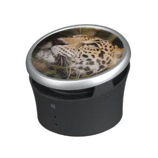 Captive jaguar in jungle enclosure 3 speaker