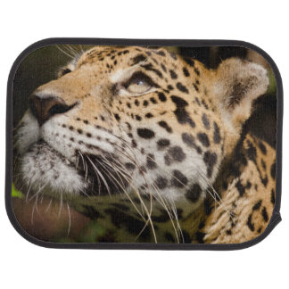 Captive jaguar in jungle enclosure 3 car mat