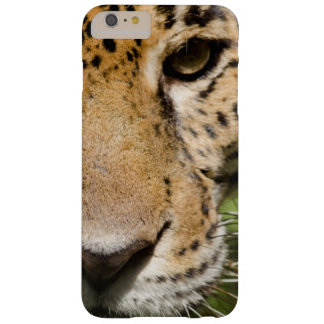 Captive jaguar in jungle enclosure barely there iPhone 6 plus case