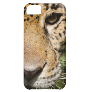 Captive jaguar in jungle enclosure case for iPhone 5C