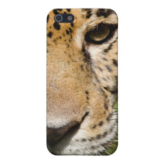 Captive jaguar in jungle enclosure case for iPhone SE/5/5s