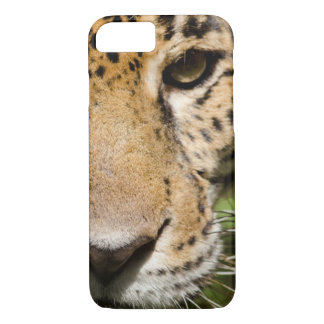 Captive jaguar in jungle enclosure iPhone 8/7 case