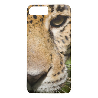 Captive jaguar in jungle enclosure iPhone 8 plus/7 plus case