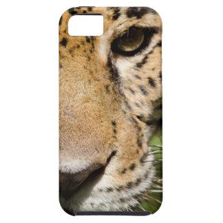 Captive jaguar in jungle enclosure iPhone SE/5/5s case
