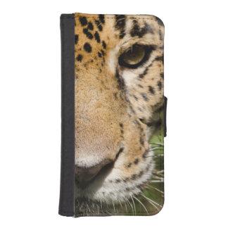 Captive jaguar in jungle enclosure iPhone SE/5/5s wallet case