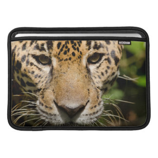 Captive jaguar in jungle enclosure MacBook air sleeve