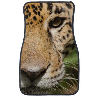 Captive jaguar in jungle enclosure floor mat