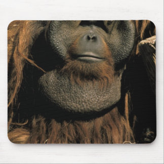 Captive orangutan, or pongo pygmaeus. mouse pad