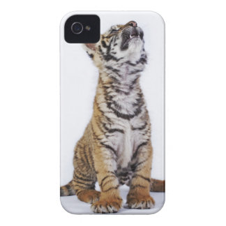 Captive, South Africa 2 iPhone 4 Covers