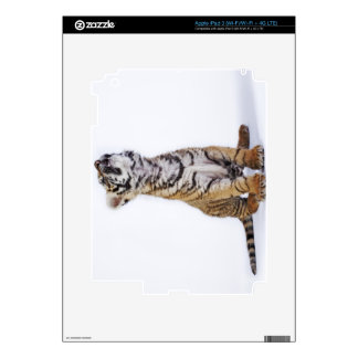 Captive, South Africa Skins For iPad 3