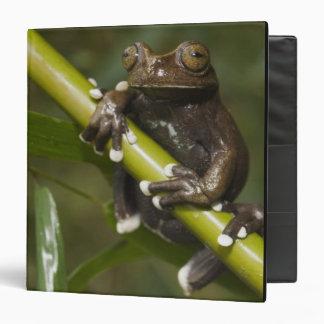Captive Tapichalaca Tree Frog Hyloscirtus 2 3 Ring Binders