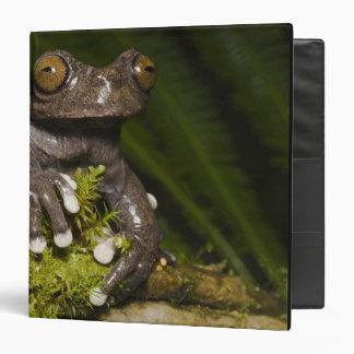 Captive Tapichalaca Tree Frog Hyloscirtus 3 Binder