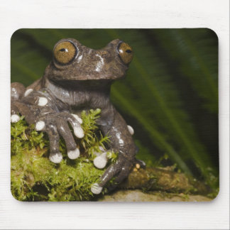 Captive Tapichalaca Tree Frog Hyloscirtus 3 Mouse Pad