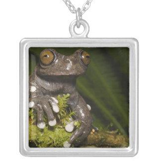 Captive Tapichalaca Tree Frog Hyloscirtus 3 Square Pendant Necklace