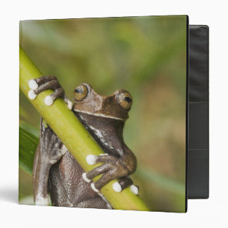 Captive Tapichalaca Tree Frog Hyloscirtus 3 Ring Binders