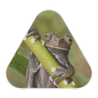 Captive Tapichalaca Tree Frog Hyloscirtus Bluetooth Speaker