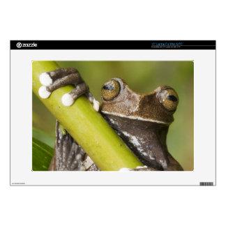 "Captive Tapichalaca Tree Frog Hyloscirtus Skin For 15"" Laptop"