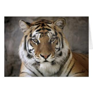 captive Tiger, Folsom City Zoo Sanctuary, Card