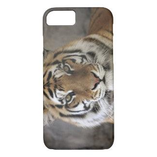 captive Tiger, Folsom City Zoo Sanctuary, iPhone 7 Case