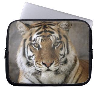 captive Tiger, Folsom City Zoo Sanctuary, Laptop Computer Sleeves