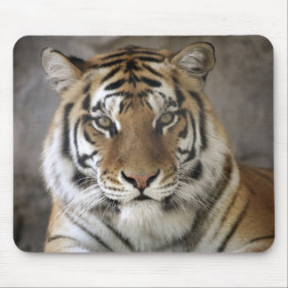 captive Tiger, Folsom City Zoo Sanctuary, Mouse Pad