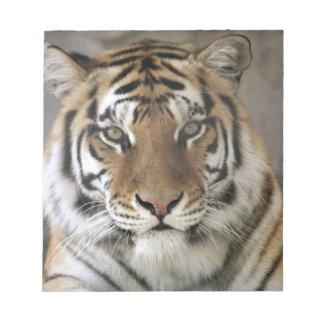 captive Tiger, Folsom City Zoo Sanctuary, Note Pad