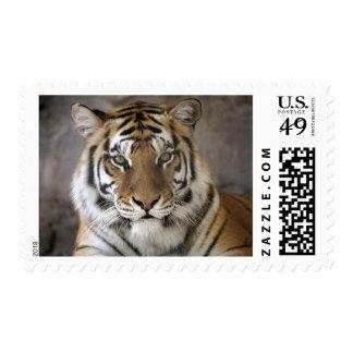 captive Tiger, Folsom City Zoo Sanctuary, Postage