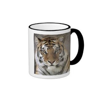 captive Tiger, Folsom City Zoo Sanctuary, Ringer Mug