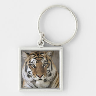 captive Tiger, Folsom City Zoo Sanctuary, Silver-Colored Square Keychain