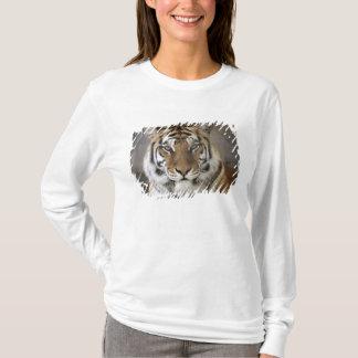captive Tiger, Folsom City Zoo Sanctuary, T-Shirt