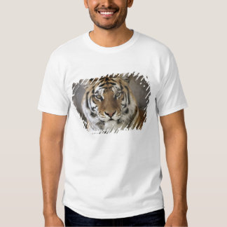 captive Tiger, Folsom City Zoo Sanctuary, Tee Shirt