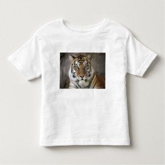 captive Tiger, Folsom City Zoo Sanctuary, Toddler T-shirt