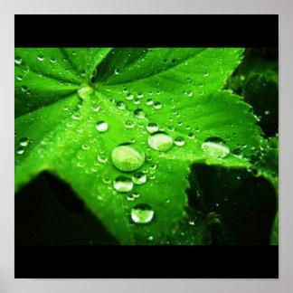 Capture la lluvia posters