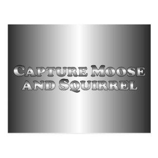 Capture Moose and Squirrel - Basic Postcard
