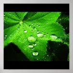Capture the rain print