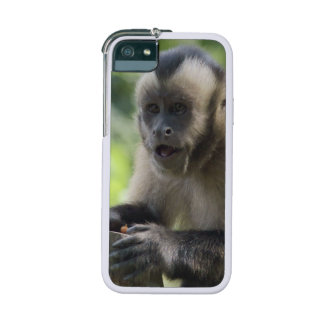 Capuchin Monkey iPhone 5/5S Case