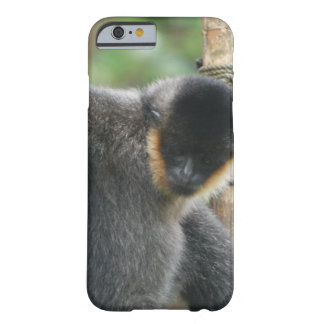 Capuchin Monkey Barely There iPhone 6 Case