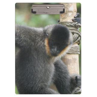 Capuchin Monkey Clipboards