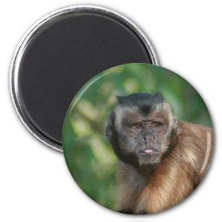 Capuchin Monkey Cute But Cranky 2 Inch Round Magnet