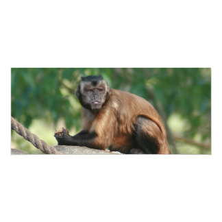 Capuchin Monkey Cute But Cranky Card