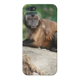 Capuchin Monkey Cute But Cranky Case For iPhone SE/5/5s