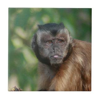 Capuchin Monkey Cute But Cranky Ceramic Tile