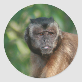 Capuchin Monkey Cute But Cranky Classic Round Sticker