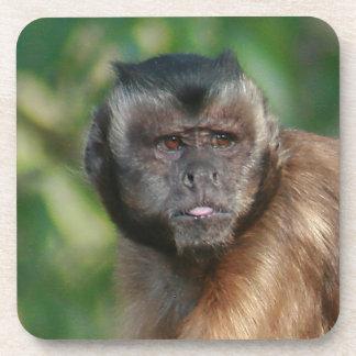 Capuchin Monkey Cute But Cranky Coaster